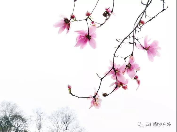 3月27日(周三)一天,药王谷赏辛夷花徒步活动公告12.jpg