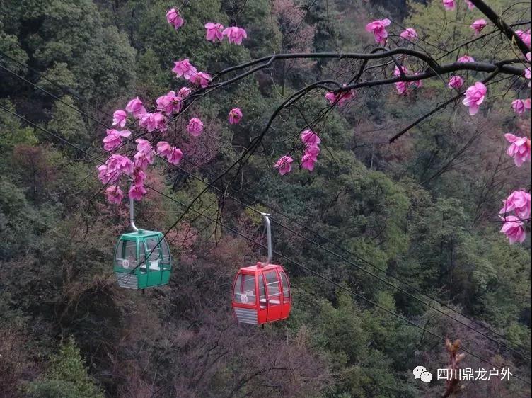3月27日(周三)一天,药王谷赏辛夷花徒步活动公告6.jpg