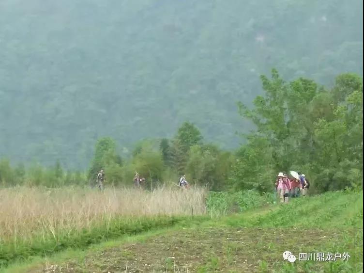 3.30(周六)彭州龙门山徒步挖野菜活动5.jpg