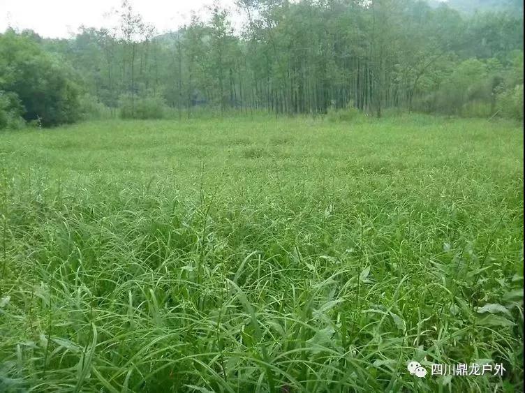 3.30(周六)彭州龙门山徒步挖野菜活动3.jpg