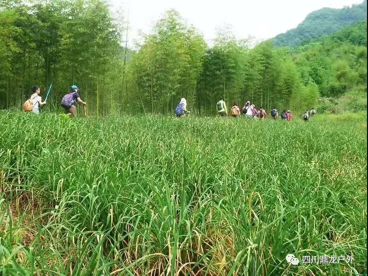 3.30(周六)彭州龙门山徒步挖野菜活动15.jpg