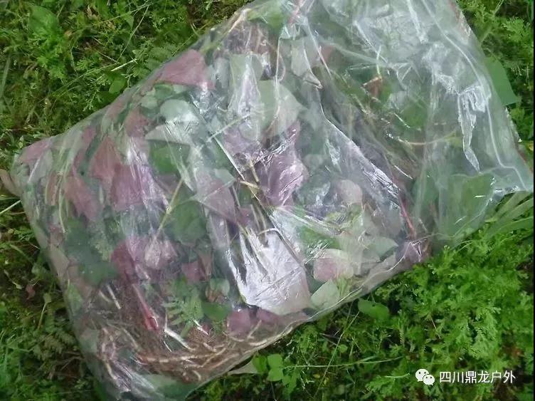 3.30(周六)彭州龙门山徒步挖野菜活动13.jpg